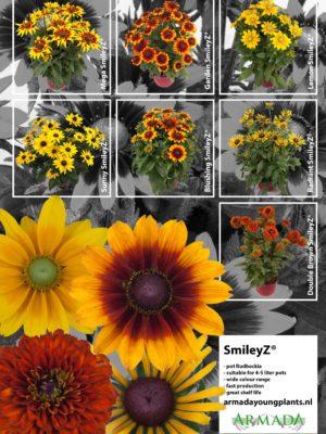 leaflet_rudbeckia-smileyz-1a
