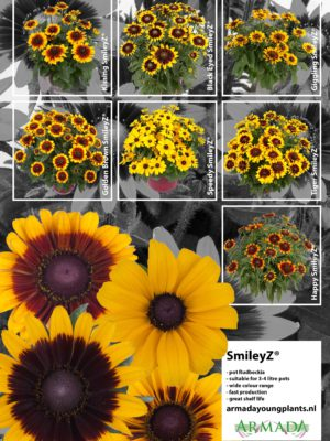 leaflet_rudbeckia-smileyz-2a