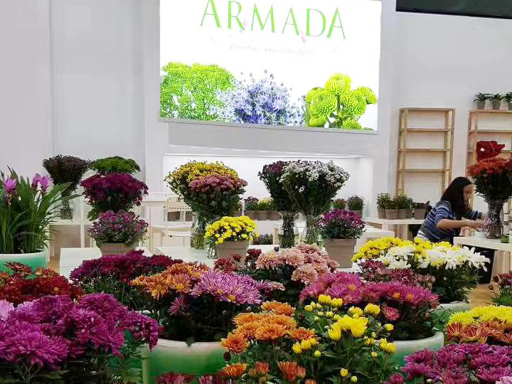 Successful Display Of Armada Varieties In Shanghai