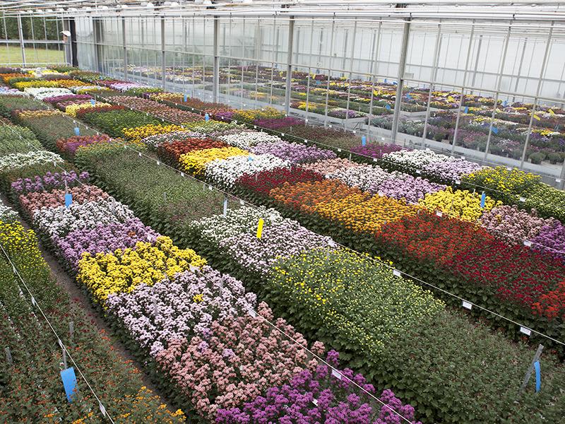 Flowertrials® 2018 Bij Armada In Volle Gang