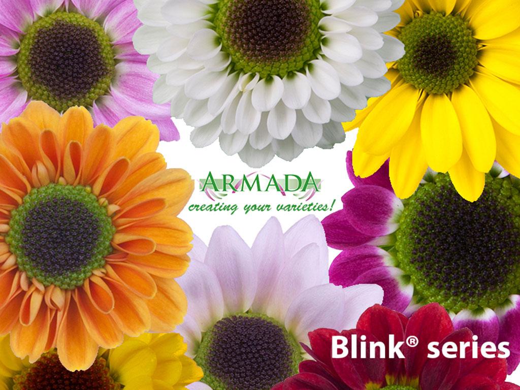 Santini Blink® Series New At Royal FloraHolland