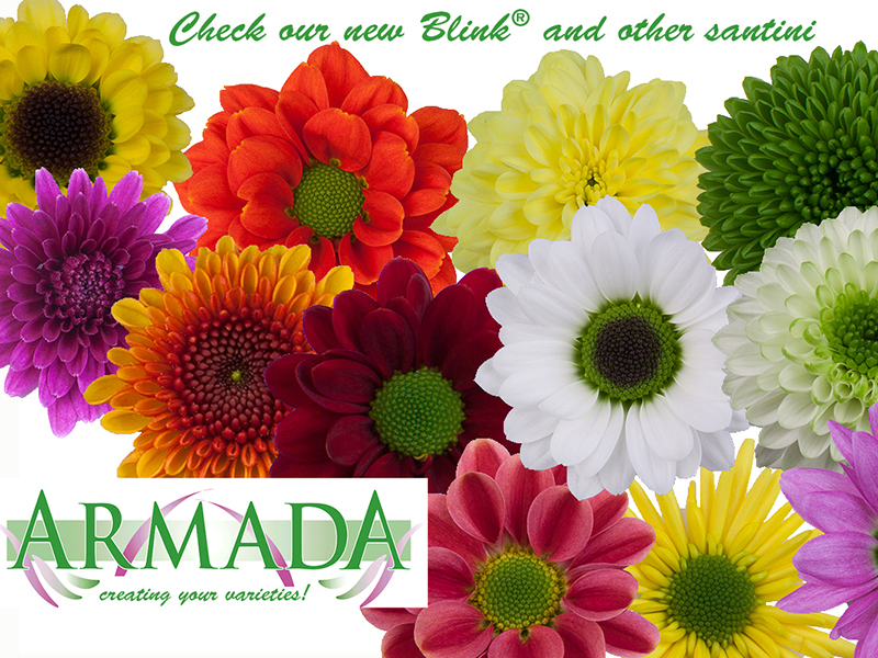 Welcome At Armada Flowertrials®