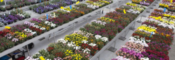 Start Flowertrials