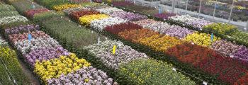 Start met FlowerTrials